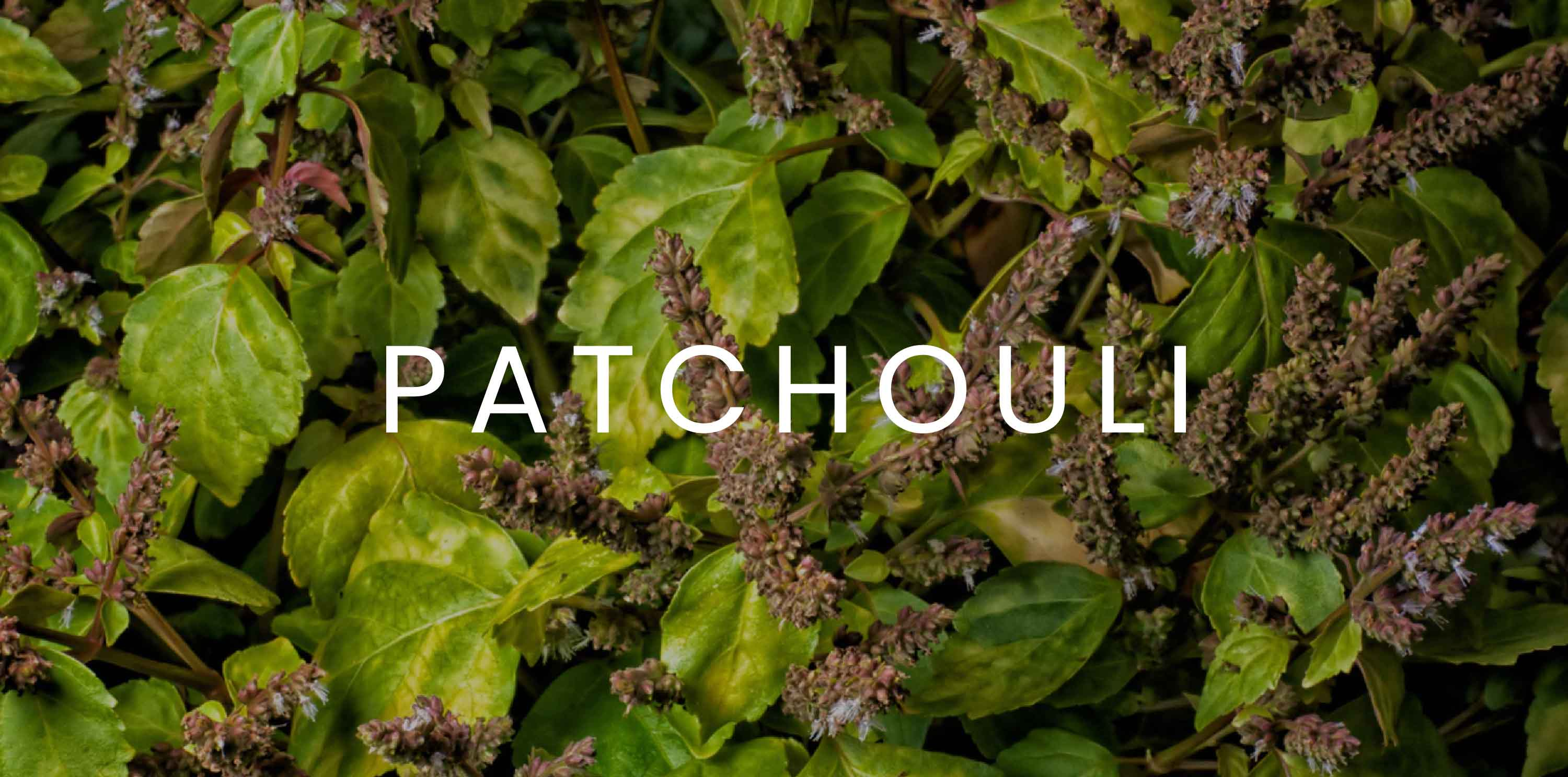 Shop patchouli